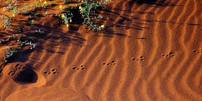 sturdy greens and delicate tracks in the red dunes of Namibia