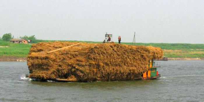A load of thatching on the Yangtze--note man and child on top!